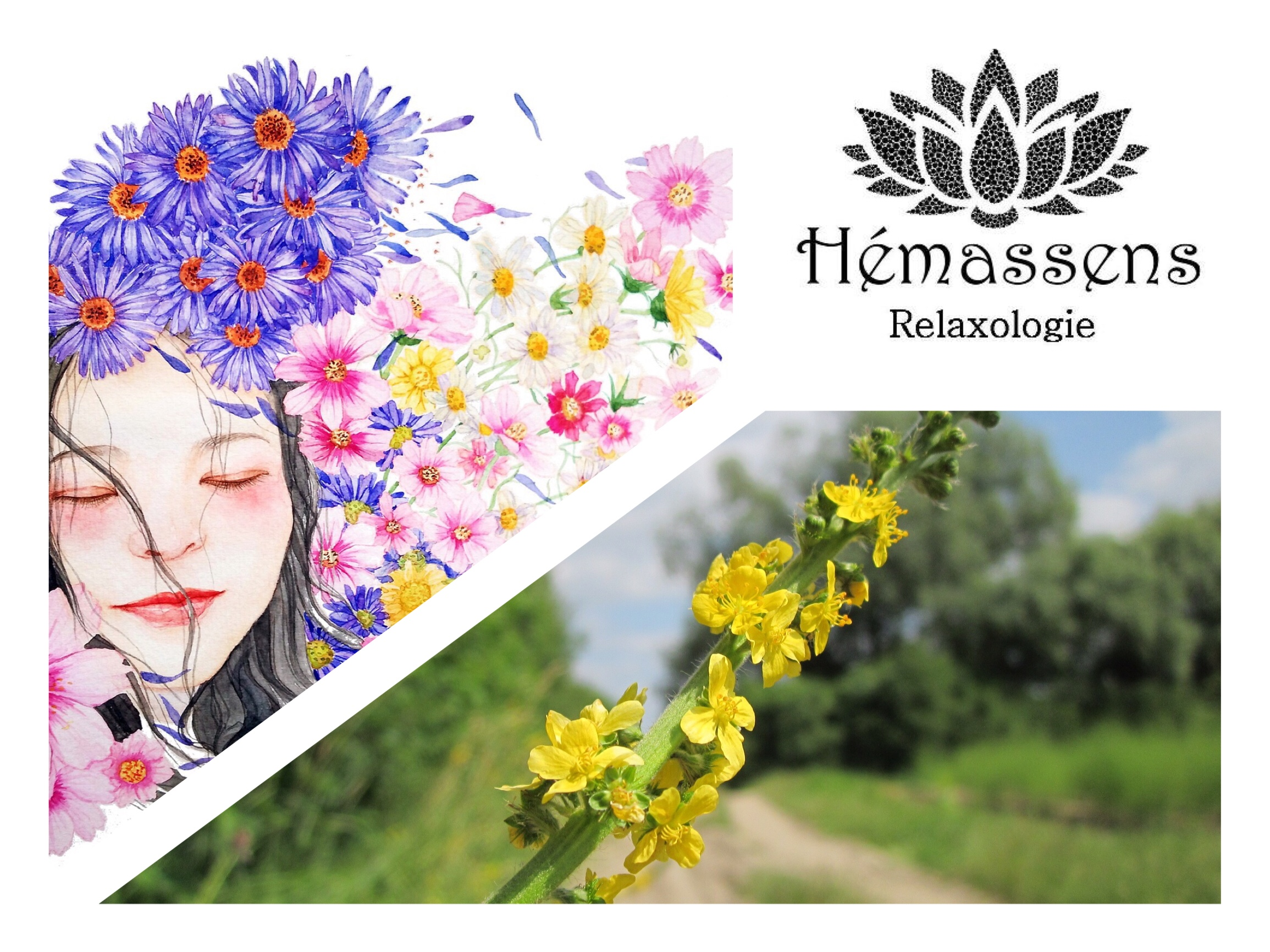 Aigremoine Agrimony Fleur de Bach Hémassens Fameck