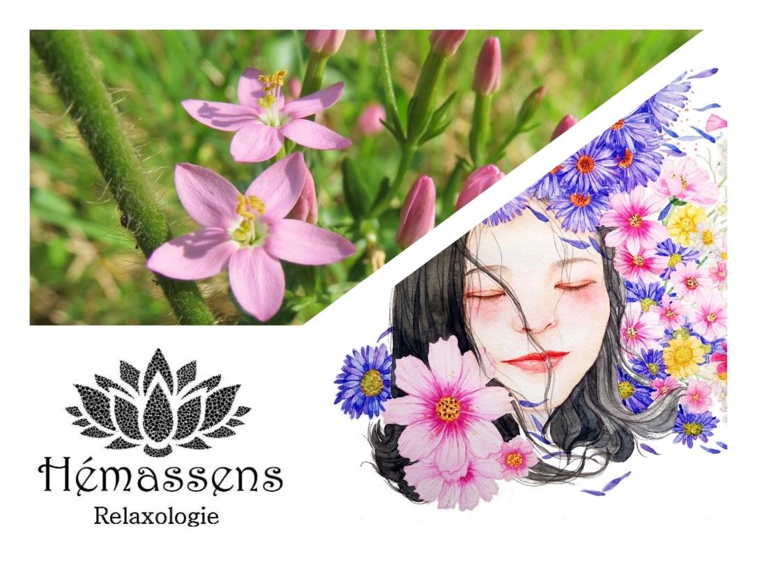 Centaury Fleur de Bach Hémassens Fameck