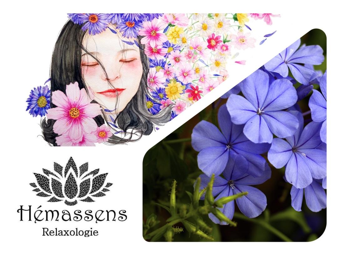 Cerato fleur de Bach Hémassens Fameck
